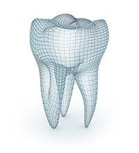3D rendering of a tooth at Dr. Starr and Dr. Orta's Office, in Washington DC,